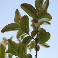 grph_home_tree
