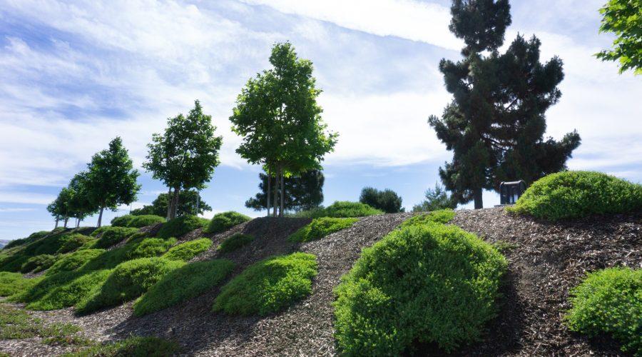 tree, bush, sky